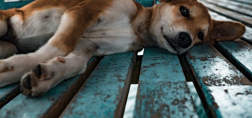 Ubrania dla psa – jak wybrać te najbardziej odpowiednie?